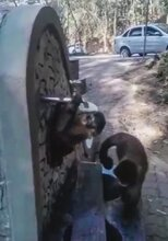 Moment Desperate Monkeys Try To Drink From Dry Tap As Brazilian Region Suffers Worst Drought In Century